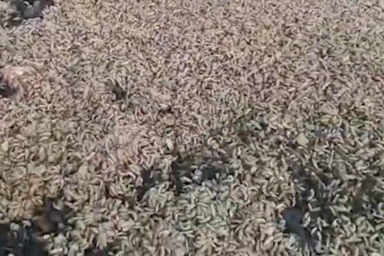 Urai Sampah Dibantu Lalat Bisa Hasilkan Cuan Belasan Juta Sebulan
