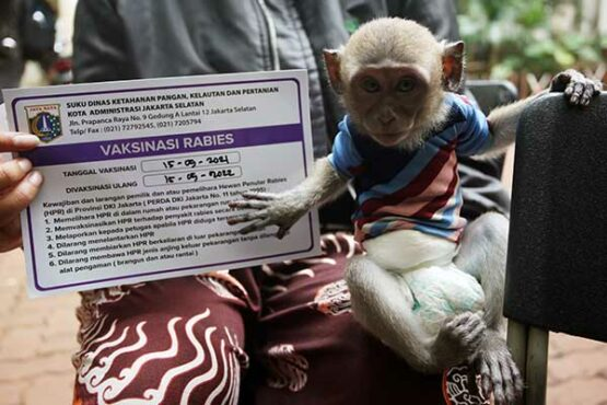 Cegah Penyakit Rabies, Hewan Peliharaan Disuntik Vaksin Secara Gratis di Jakarta
