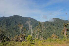 Pegunungan Arfak Papua Barat, Satu-Satunya Zona Hijau Covid-19