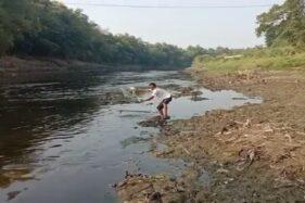 Parah! Limbah Ciu di Sungai Bengawan Solo Warnanya Hitam & Baunya Bikin Ikan Mabuk