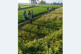 Jenazah Pria Tergeletak di Sawah Klumprit Sukoharjo, Diduga Korban Laka Tunggal