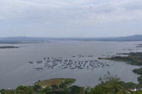 Fenomena Upwelling Bikin Petani Ikan WGM Wonogiri Cemas