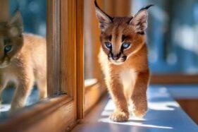 Tahukah Kamu Harga Kucing Termahal di Dunia Bisa Capai Rp1,5 Miliar Loh
