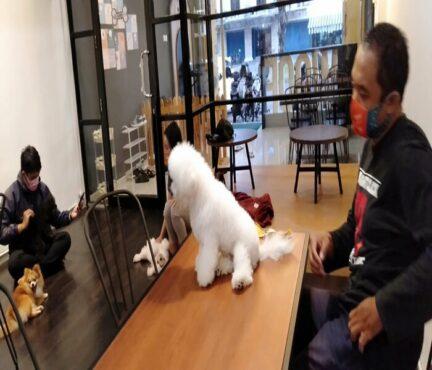 Mau Nyoba Dog Cafe Pertama di Solo? Di Sini Tempatnya