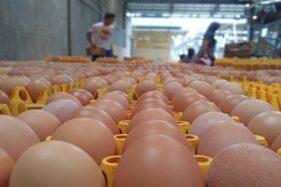 Harga Telur Anjlok Rp14.000/Kg, Peternak Ayam di Boyolali Gulung Tikar