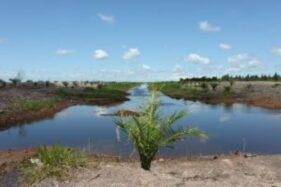 Budi Daya Hortikultura di Lumbung Pangan dan Problem Lingkungan