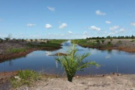 """""""Area pengembangan lahan gambut yang gagal dan dialihkan kepada pemegang konsesi perkebunan besar kelapa sawit. (saveourborneo.org)"""""""