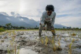 40% Populasi Dunia Tak Mendapat Akses ke Makanan Sehat