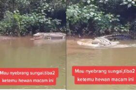 Merinding! Detik-Detik Pria Dikejar Buaya Jumbo di Sungai