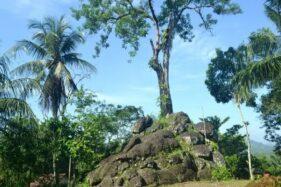 Misteri Pohon Tua di Situs Watu Tumpang Kebumen