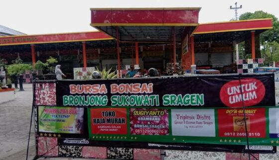 Biar Ramai, Pedagang Bonsai Buka Lapak di Sentra Kuliner Sragen