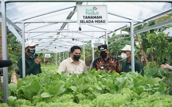 Menteri BUMN Dukung Program Electrifying Agriculture PLN
