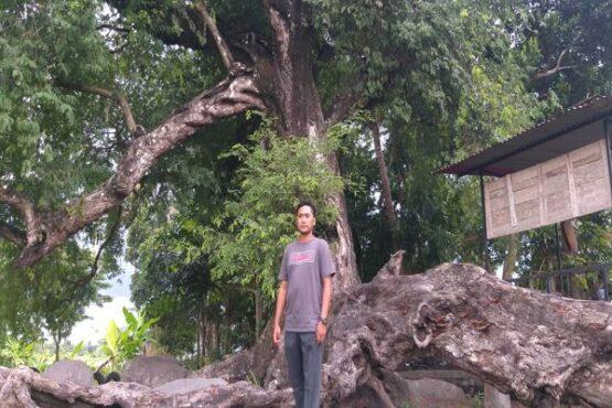 Gede Banget, Pohon Asam di Taskombang Klaten Diyakini Berusia 200 Tahun