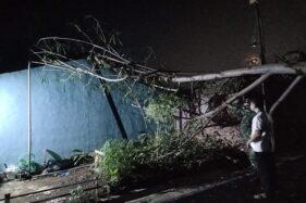 Hujan Deras & Angin Kencang di Semarang, Pohon Tumbang Timpa Rumah