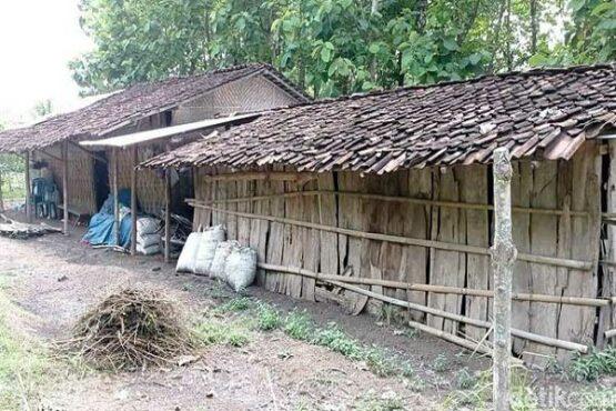 Kisah Sedih Guru Honorer di Ngawi, Tinggal Seatap dengan 6 Ekor Kambing