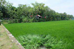 Kekinian Banget, Penyemprotan Hama di Karangdowo Klaten Gunakan Drone
